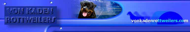 rottweiler stud dogs, rottweiler males